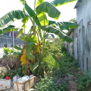 Bán đất xây trọ tại Nguyễn Hữu Cảnh, Thủy Dương. Huế DT 158m2